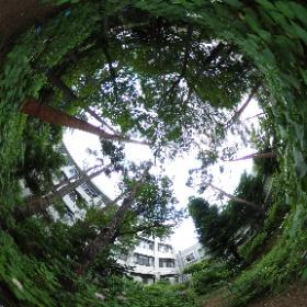 緑がいっぱいだ!紫陽花ウィークの、中庭解放。うん十年前に通った高校です。 #清瀬高校#紫陽花ウィーク#中庭解放#あじさい #theta360