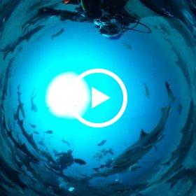 2019/03/24 南房総・伊戸 シャークスクランブル #padi #diving #フリッパーダイブセンター #伊戸 #theta #theta_padi #theta360 #shark