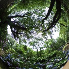府民の森ぬかた園地 あじさい園