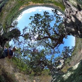 Portugal pjotr en anne - kurkboom