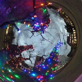 駿河台大学 屋外クリスマスツリー?