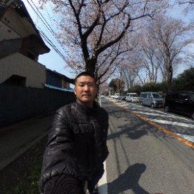 松飛台の桜 #theta360