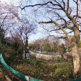 #ちゃらぽこ散歩会 工事中の善福寺川
