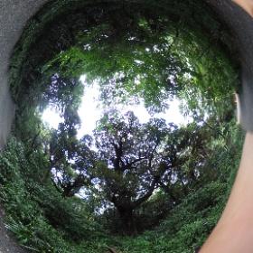 自然教育園 Shizenkyoikuen   ドイツ式カイロプラクティック逗子整体院 www.zushi-seitai.com  #theta360