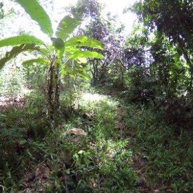 Sekundärvegetation auf der Insel Nosy Komba, Region Diana, Nordwest-Madagaskar, März 2020