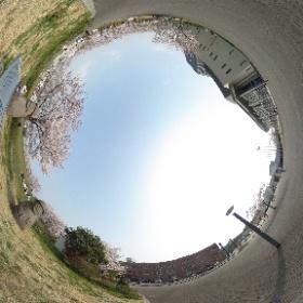 三田市天神:桜とトルハルバン案内板 #sakura3d