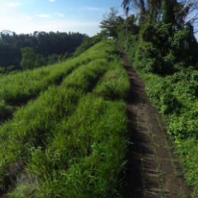 Hiking. The Ridge Trail from Central #Ubud. A life changing experience every visitor to Ubud must do. Rice fields on one side and deep gorge on the other aide. Surrounded by #nature. #theridgetrail #ubud  #travelfoodiestv #theta360