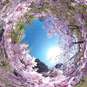 2015.3.31 瑞雲郷桜山