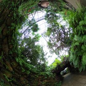 夢の島熱帯植物-Aゾーン