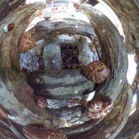 原木椎茸の井桁(普通この時期に井桁にはしませんが、出荷制限解除用に)のなかにThetaを突っ込んでみました。 椎茸いっぱい。 出荷出来る日を夢見て。