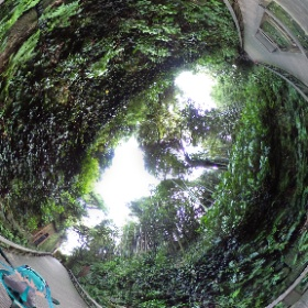 猿島にて。こんな感じの道が続いている。少し神秘的。 #miku360 #theta360
