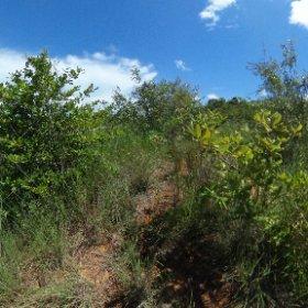Sekundärvegetation nahe Mahitsihazo, etwa 100 km südlich von Ambanja, Region Sofia, Nord-West-Madagaskar, März  2019