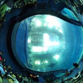 美ら海水族館 #theta360