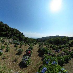 笠山観光農園 #theta360