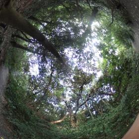 自然教育園で森林浴してきましたー。 とてもよかったです。森林浴はリラックス効果ばっちり!いいですよー! ドイツ式カイロプラクティック逗子整体院  www.zushi-seitai.com  心リラックスしていますか?整体は心と体をリラックスさせる極上のいやしですよ。  #theta360