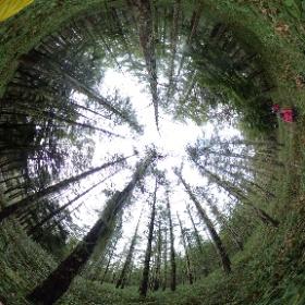 4. サルオガセの森 #theta360