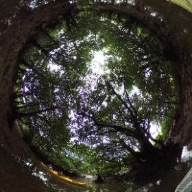 2018/11/02 西表島・ガイドにおまかせツアー【マングローブカヌー&滝遊び】 181102(4)