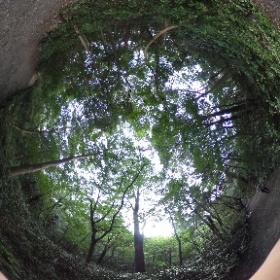自然教育園@東京、港区  ドイツ式カイロプラクティック逗子整体院 www.zushi-seitai.com   #theta360