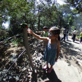 Feeding a lorikeet at #SanDiego #WildAnimalPark #safari @sdzsafaripark #theta360