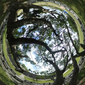 beautiful tree #theta360