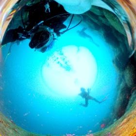 2021/06/06 大瀬崎、柵下#ボロカサゴ #padi #diving #フリッパーダイブセンター #大瀬崎 #theta #theta_padi #theta360 #群馬 #伊勢崎 #ダイビングショップ #ダイビングスクール #ライセンス取得 #padiライフ