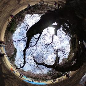 新宿御苑でTHETAで撮ってみました