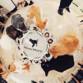 Mohu Mohu Cafe @ Bangkok #theta360