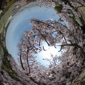 枚方市-空見公園 2018-04-01  #sakura3d #theta360