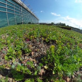The new green roof on MSP Airport's Terminal 2