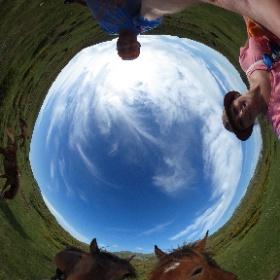 Paardjes voeren #theta360