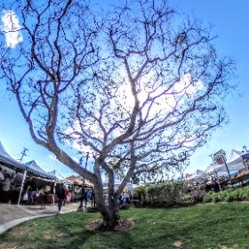 Dana Point Farmers Market  #theta360