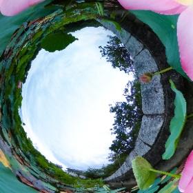 この360度写真は、静岡県藤枝市蓮華寺池のハスの花であり、THETA Vで撮影しました。 #theta360