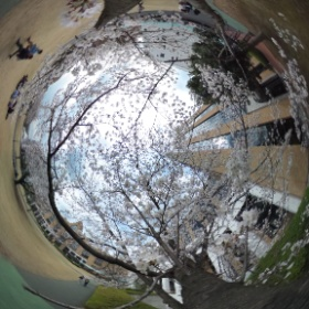 全天桜テスト #theta360