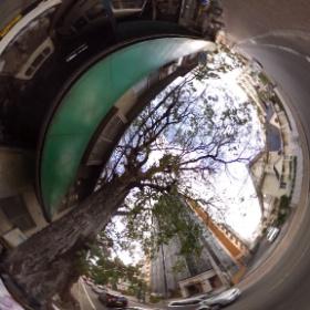 松山ではまあまあ有名(と思う)でっかい樹。正に大木。幹と根っこで歩道が占拠されてますww 車道にも枝葉が生い茂ってますよー。 #theta360