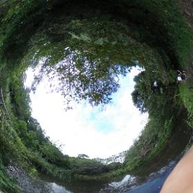 自然教育園です。東京港区にある公園です。 歩く楽しさ!応援していまーす。 ドイツ式カイロプラクティック逗子整体院。 足腰の不調で悩んでいませんか?楽になったら歩きやすいですよ! www,zushi-seitai.com    #theta360