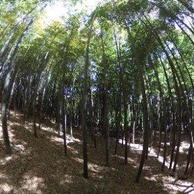 竹林 bamboo grove #theta360