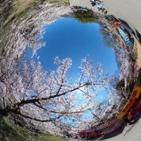 上田城跡公園4 #sakura3d #theta360