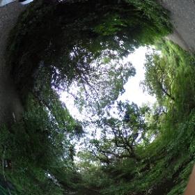 港区にある自然教育園いいですよ~。 ins.kahaku.co.jp  ドイツ式カイロプラクティック逗子整体院 www.zushi.seitai.com   #theta360