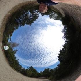 Курсшаская коса. Высота Мюллера.  18 видов деревьев, 4 вида лишайника, скрипучий песок и вода со всех сторон... Россия Матушка удивляет каждый раз!!!