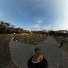 【シータ遊び心No@005オランダ風車】  名城公園の風車。お花畑とか似合わないわけですが良さげです。 #theta360