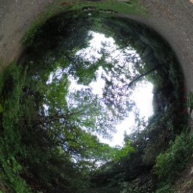 自然教育園です。自然が深い!きれい!歩くのたのしいですよ!  ドイツ式カイロプラクティック逗子整体院 www.zushi-seitai.com  #theta360