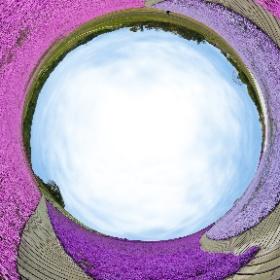 広大な敷地を埋めつくす色とりどりの花の絨毯・・・ ✿東京ドイツ村の芝桜まつりが始まります✿ ぜひ、お越しください(*´▽`*)  〇東京ドイツ村 住所:袖ケ浦市永吉419 TEL:0438-60-5511