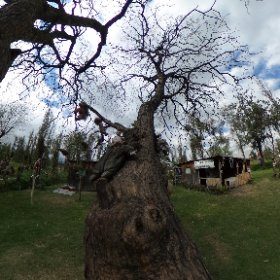 360 from the Island Of Dead Dolls. #theta360