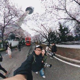 2017.4.1 두류공원 벚꽃나들이
