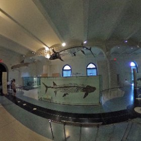 National Museum of Natural History - New York #theta360