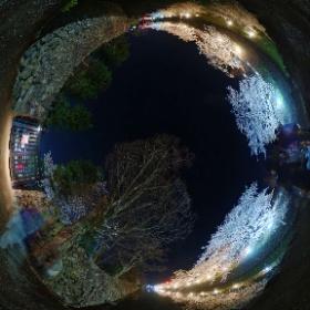 松本城の桜 #sakura3d #theta360