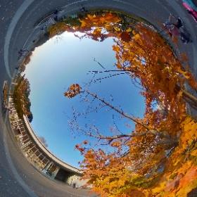 昭和記念公園の紅葉 #momiji3d #theta #thetaのある生活 #thetav #昭和記念公園 #theta360