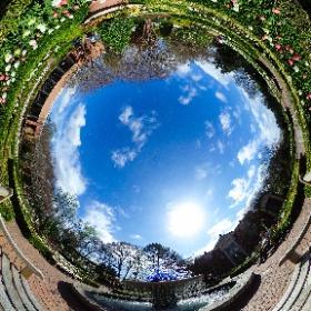 Atlanta Botanical Garden.  Copyright Dr Roisum, POVphotosplus.com, spring 2017. #theta360