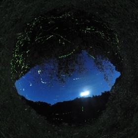 360でのホタル設定は大体コツがつかめてきた。 ISO640 8秒 インターバル撮影 で 数百枚撮影しコンポジット   #firefly3d #theta360