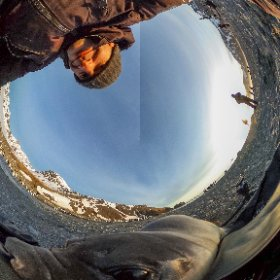 Just got back from an amazing trip to South Georgia Island, where I made a new friend. #theta360